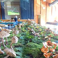 Große Pilzausstellung im Schwäbischen Wald