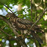 Tiere entdecken auf dem Pirschpfad in Gaildorf