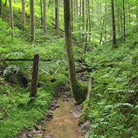 Wald, ein stiller Genuss