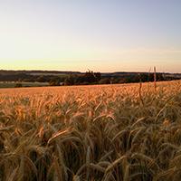 SHA_Kichberg im glanz der Abendsonne 2014-06-26-Banzhaf