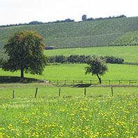 Weinberge in Michelbach a.W Die Kommunen im Naturpark   Michelbach am Wald