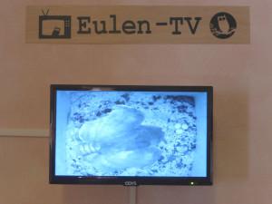 komp 140701 eulenkasten 2 300x225 Eulen TV