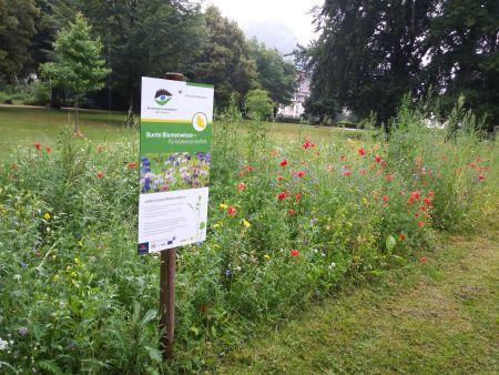 2018 10 04 AG Naturparke Leuchtturmprojekte Blumenwiese Artikelbild AG Naturparke Baden Württemberg stellte Leuchtturmprojekte vor