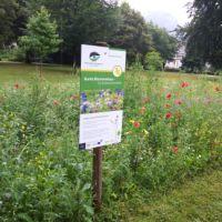 2018_10_04_AG Naturparke Leuchtturmprojekte Blumenwiese_Beitragsbild