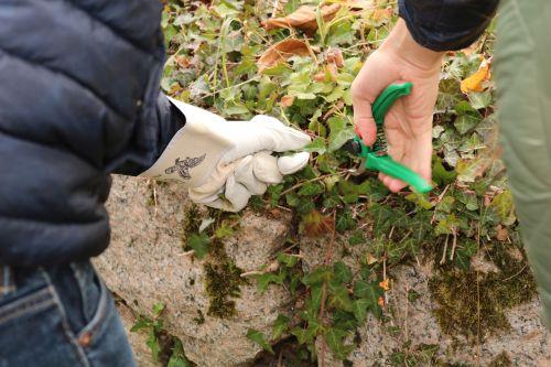 2018 10 23 Herzenssache Natur Bühlertal 03 Artikelbild Herzenssache Natur   erfolgreiche Landschaftspflege