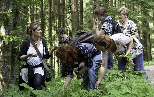 20190413 WildkräutertourMitFlammenkuche 6 Schwarzwald Guide Tour: Wildkräutertour mit Flammkuchen