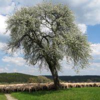20190420_Wanderung-zu-den-Schwarzwaldschafen_1_Beitragsbild_(c)_Matthias Kober