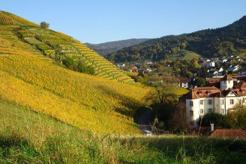 20190608 Auf historischen Pfaden zu erlesenen Weinen Schwarzwald Guide Tour: Auf historischen Pfaden zu erlesenen Weinen