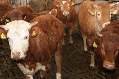 2019 04 04 Auftakt Muh die Kuh 4 Auftakt Projekt Muh, die Kuh: Frühstück für die Kühe