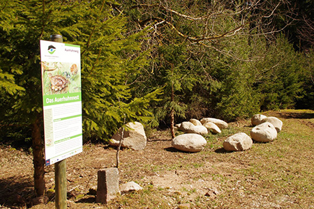 Auerhahnweg 03 Der Auerhahnweg in Tennenbronn
