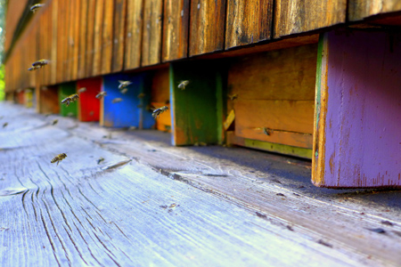 Bienen Fotowettbewerb erfolgreich gestartet
