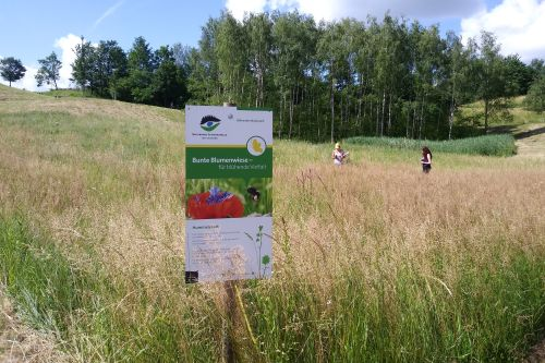Blühender Naturpark03 Blumenwiesenpatenschaft als Weihnachtsgeschenk