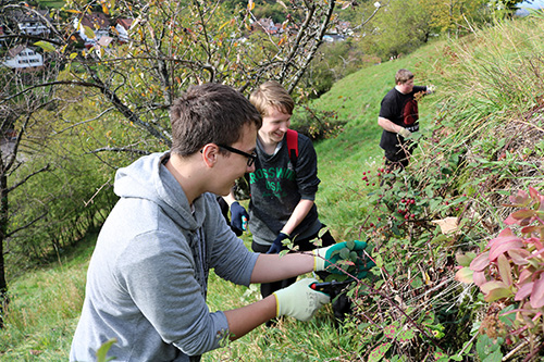 Ehrenamt021 Freiwilliges Engagement wächst von Jahr zu Jahr