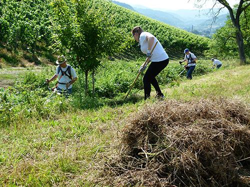 Ehrenamt03 Freiwilliges Engagement wächst von Jahr zu Jahr