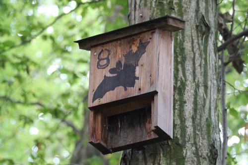 Fledermaus Bunte Wiesenvielfalt erhalten