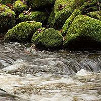 Flussbettwanderung Beitragsbild