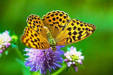 Forum Bienenweide Artikelbild 1 Jetzt Wildblumenwiesen einsäen
