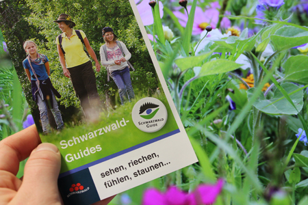 Guides Neues Jahresprogramm