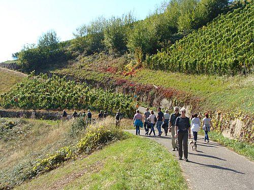 Naturpark Schwarzwald Blog Weinwandertag Buehlertal 2017 c Gemeinde Buehlertal 1 Weinwanderung in Bühlertal