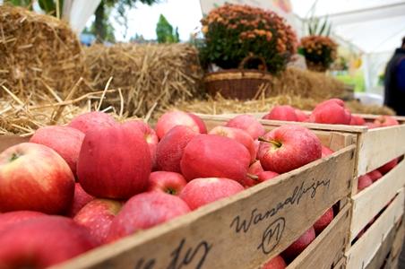 TBW Markt Ruhestein mittel Ausflugsziel mit kulinarischen Höhepunkten