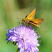 Wildblumen_Beitragsbild