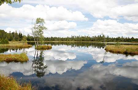 Wildseemoor Fotowettbewerb: Natürlich abgelichtet!