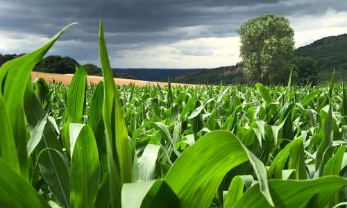 Foto des Monats lde 500x300 Felder, Wiesen und Weiden   KapellenSchleife 1