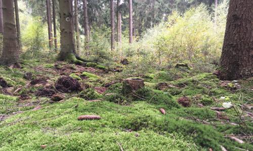 Orscheider Wald 500x300 Zauberstimmung im Märchenwald