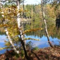 Waldsee Argenthal (c) Naturpark Soonwald-Nahe