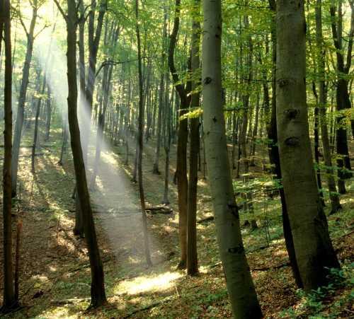 Frühling im Wald groß Mit Lederstrumpf in den Wald