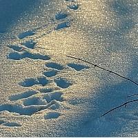 Spuren im Schnee (c) VDN/FUHO