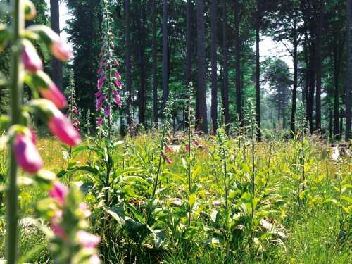 Waldwiese groß Der Wald erzählt seine Geschichte(n)