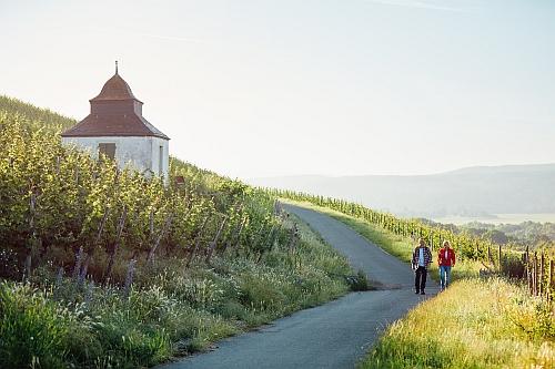 Weinbergswanderung groß Pflanzenwanderung am Binger Weg