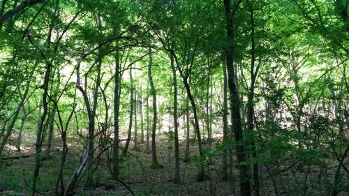 c Naturcamps Hunsrück Waldbaden groß Tag des Waldes – Gemeinsam aktiv sein: Lebendige Wälder