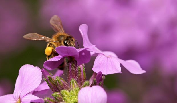 040 ps 2 skal 620x361 Spannende Termine rund ums Thema Biene