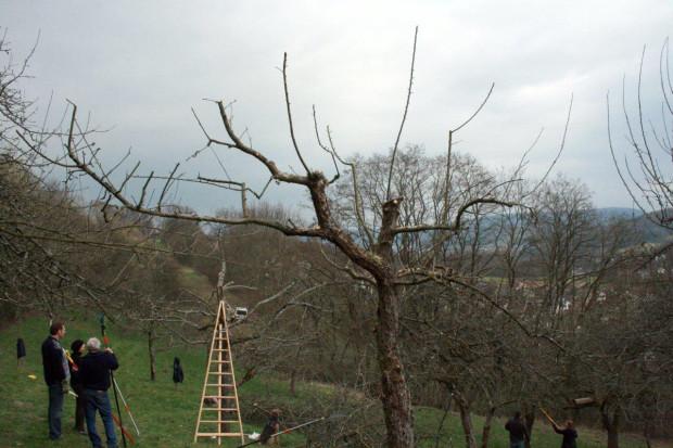 A9R1e38eso dw8pxm 3vw 620x413 Einführung in den Obstbaumschnitt