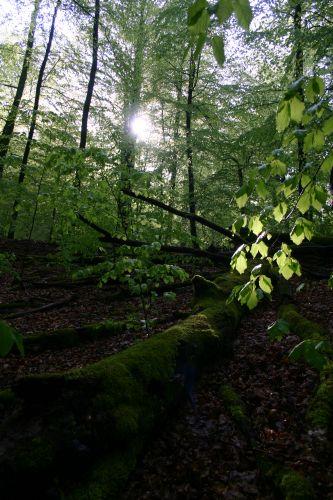 Abenteuer Wald Abenteuer Wald