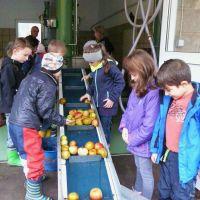 Am Laufband werden Äpfel mit Faulstellen aussortiert 200x200 (C. Salomon)