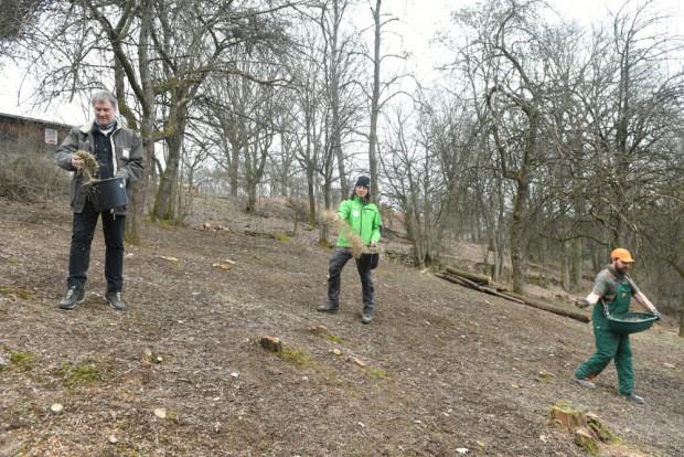 """Ausbringung Saatgut 1 Torsten Ruf 620x414 Magerwiesen am Rodenbacher """"Alten Weinberg"""" werden wiederhergestellt"""