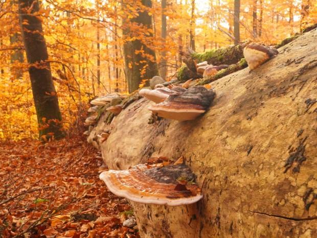 DSC04595 620x466 Einblicke in das Leben der Bäume
