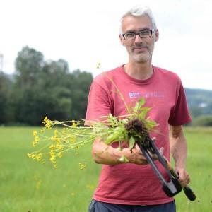 Gebietsbetreuer Torsten Ruf mit einer Wasserkreuzkrautpflanze (Foto Jennifer Weidle)