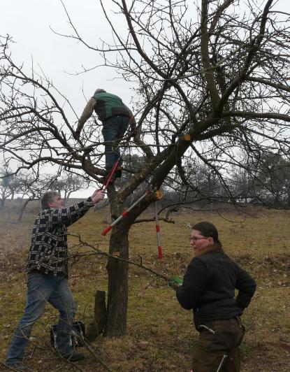 Dammbach Baumpflege Landwirte und Naturschützer packen im Dammbachtal gemeinsam an