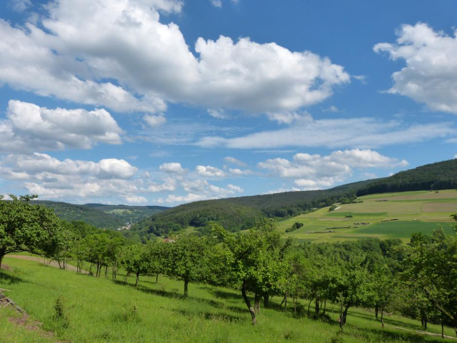 Dammbachtal Talblick 940x705 Artenreiche Weidelandschaft im Dammbachtal