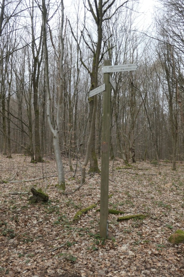 Def 054 2021 Tiergartenberg Rothenbuch 2 620x930 Vandalismus im Naturpark Spessart