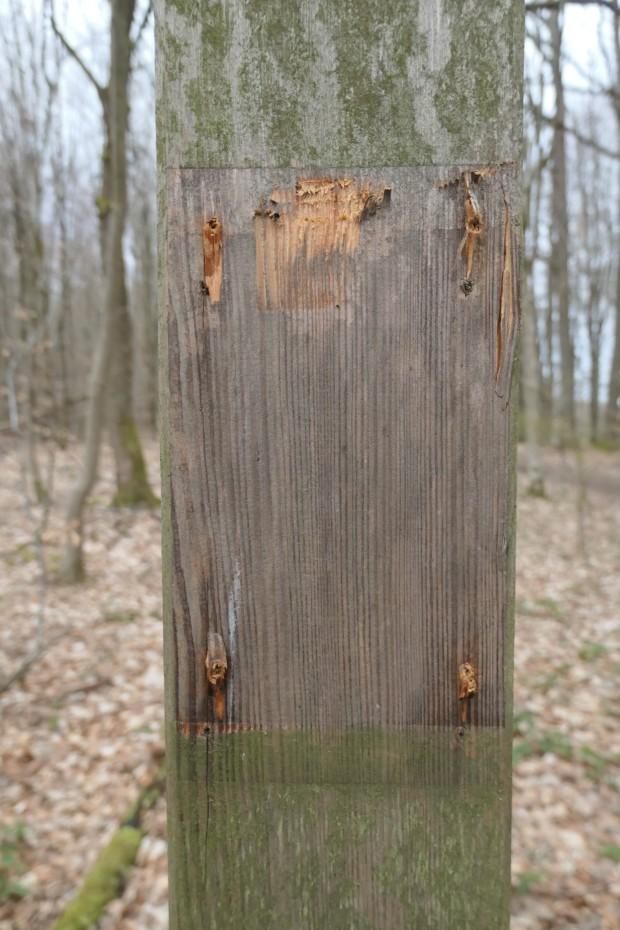 Def 054 2021 Tiergartenberg Rothenbuch 3 620x930 Vandalismus im Naturpark Spessart