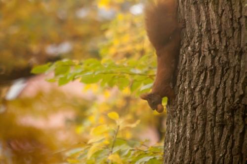 Eichhörnchen Andreas Quilling verkleinert Herbst in Wald und Flur