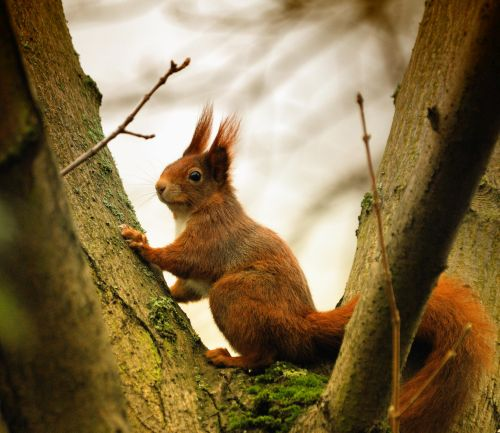 Eichhörnchen Christoph Aron klein Wir lernen Emil das Eichhörnchen kennen