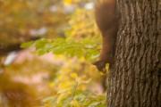 Eichhörnchen, Andreas Quilling