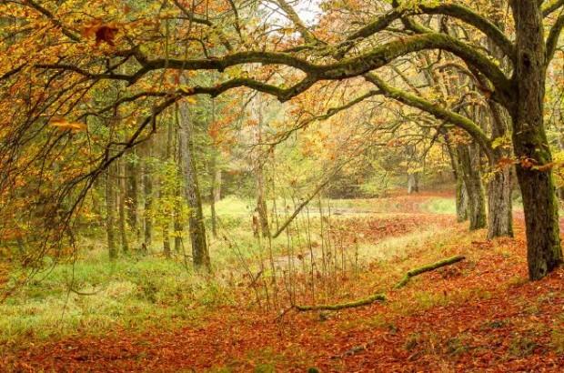 """Fotograf Christian Naumann4 620x410 Fotoausstellung: """"Naturpark Spessart   Lebensraum Wald"""""""