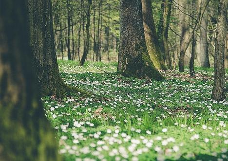 Frühling Daniel Wehner1 Veranstaltungsprogramm im Mai